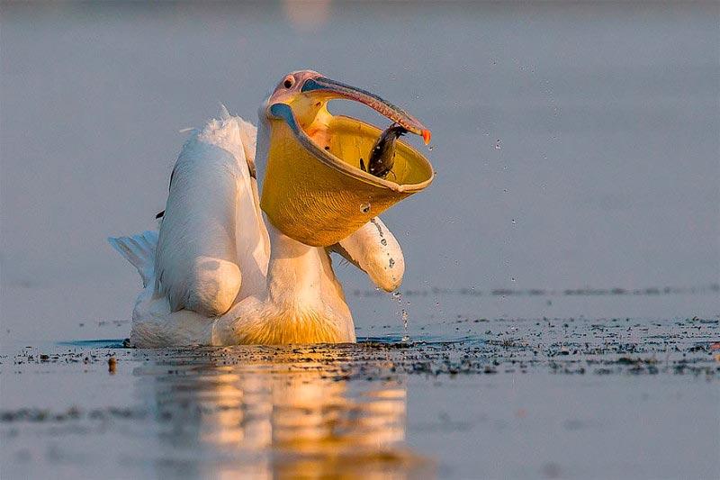 Bird Photographer of the Year 2017: лучшие фотографии птиц Дневная корзина. Ионель Онофрас, Румыния