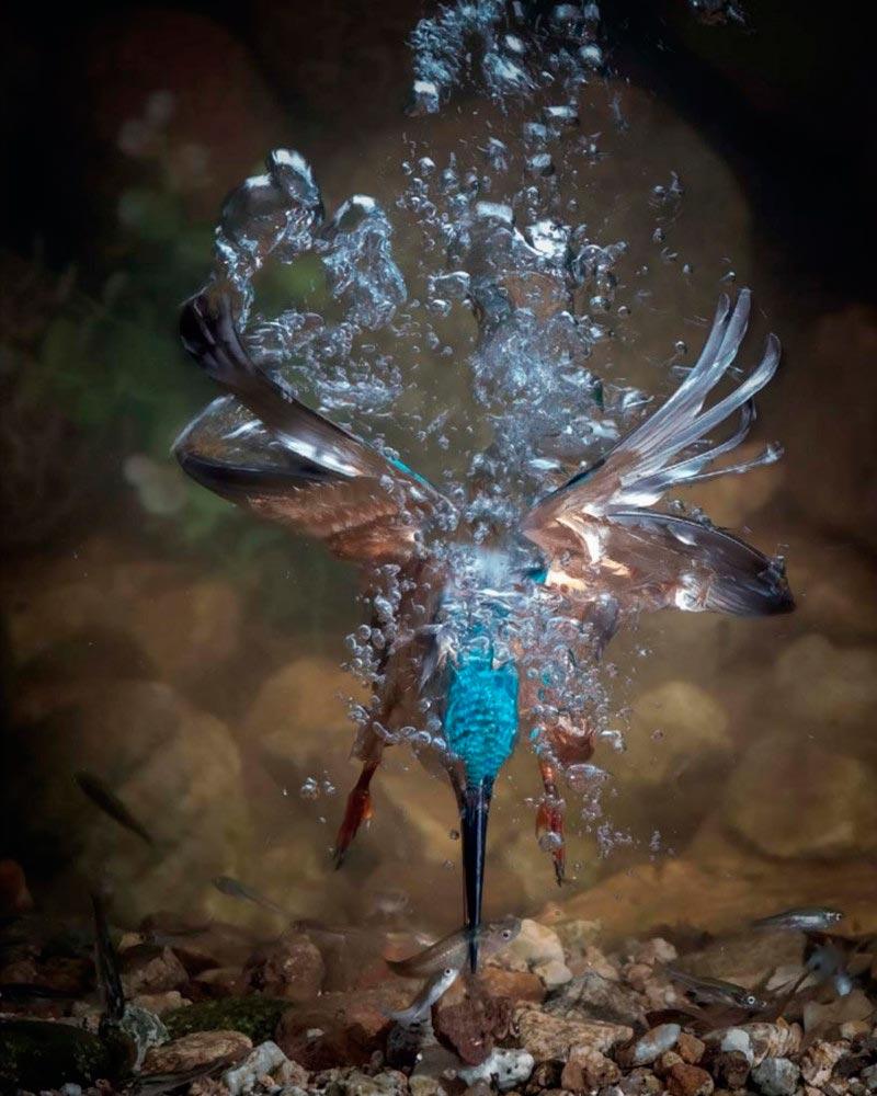 Bird Photographer of the Year 2017: лучшие фотографии птиц Я потерял свою маму. Фахад Аль-Энези, Испания