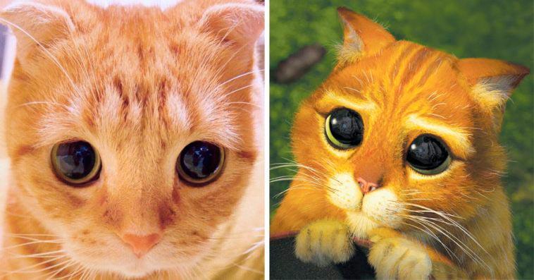 Мута — Кот в сапогах в реальной жизни