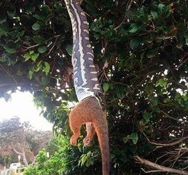 Причины любить Австралию издалека Змея