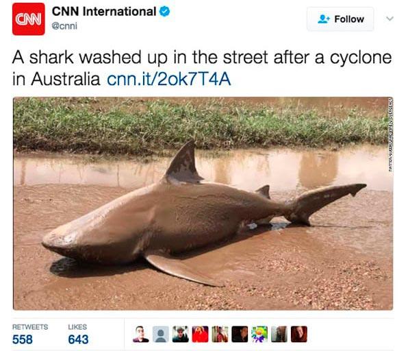 Причины любить Австралию издалека Акула