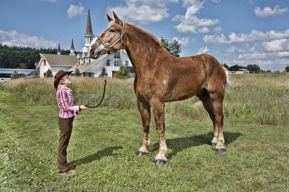 Аномально-крупные животные Конь Биг Джейк