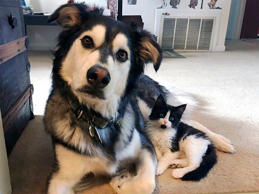 Двойники в мире животных собака кот