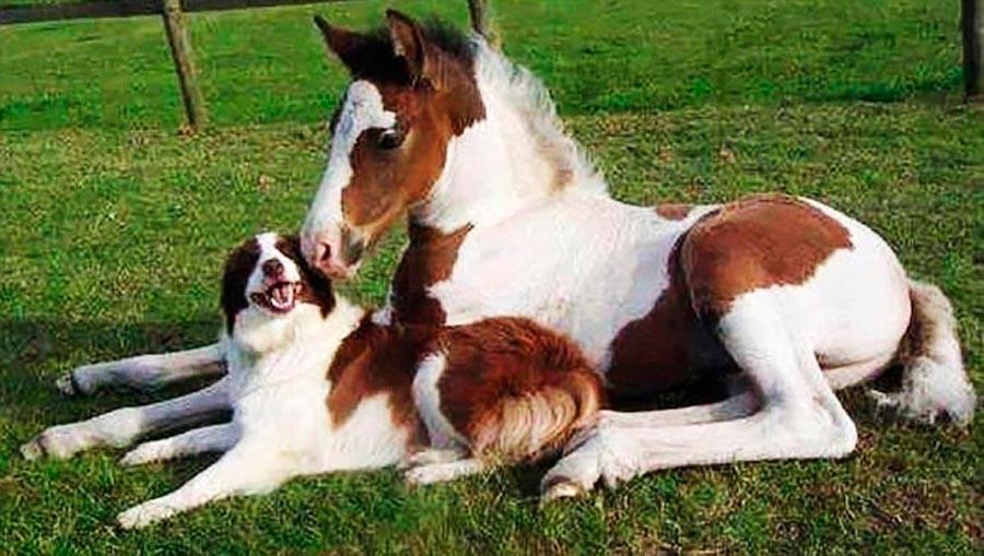 Двойники в мире животных собака жеребенок