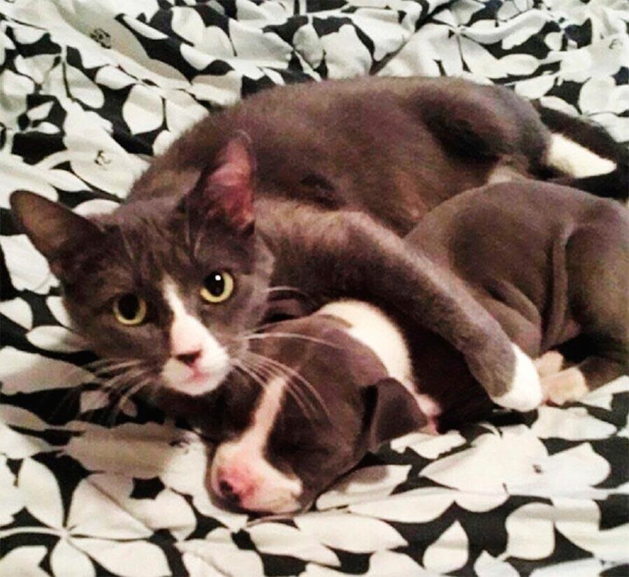 Двойники в мире животных кот собака