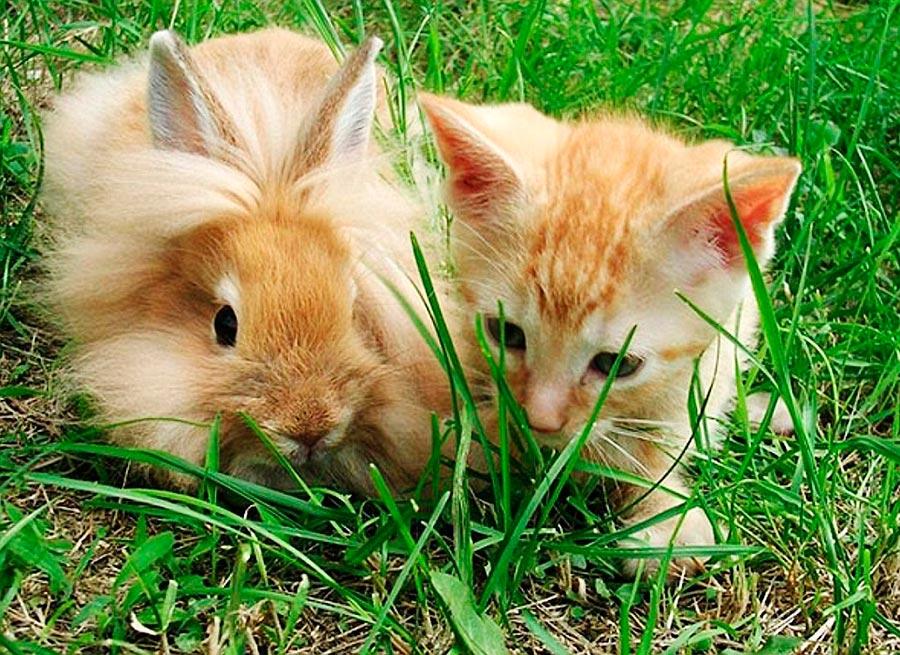 Двойники в мире животных кот кролик