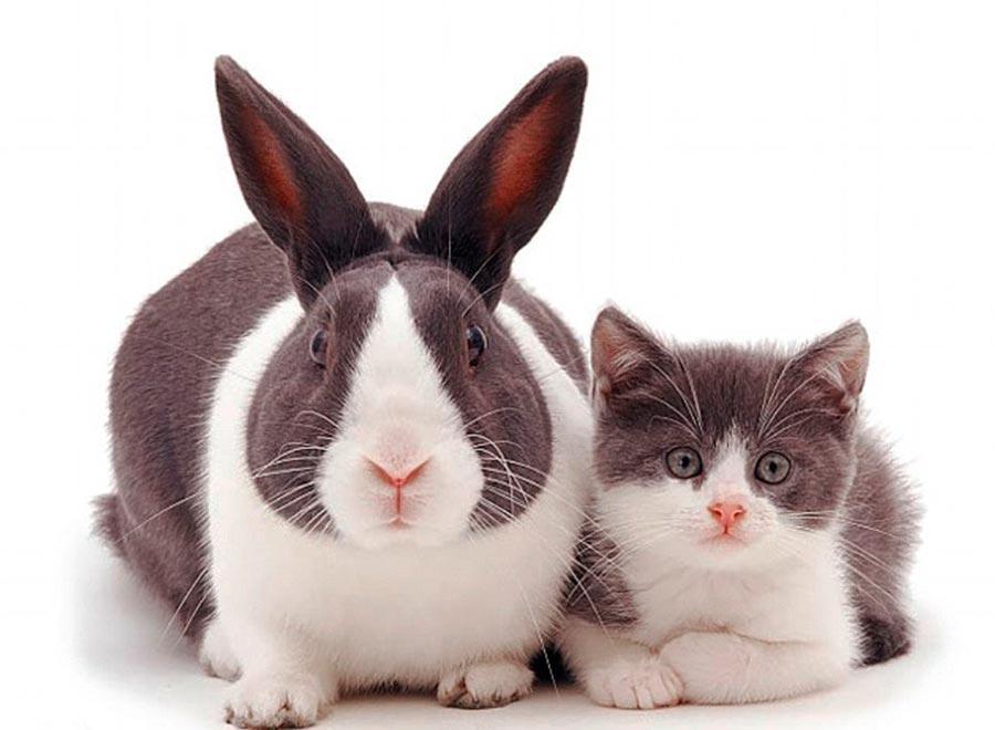 Двойники в мире животных кролик котенок