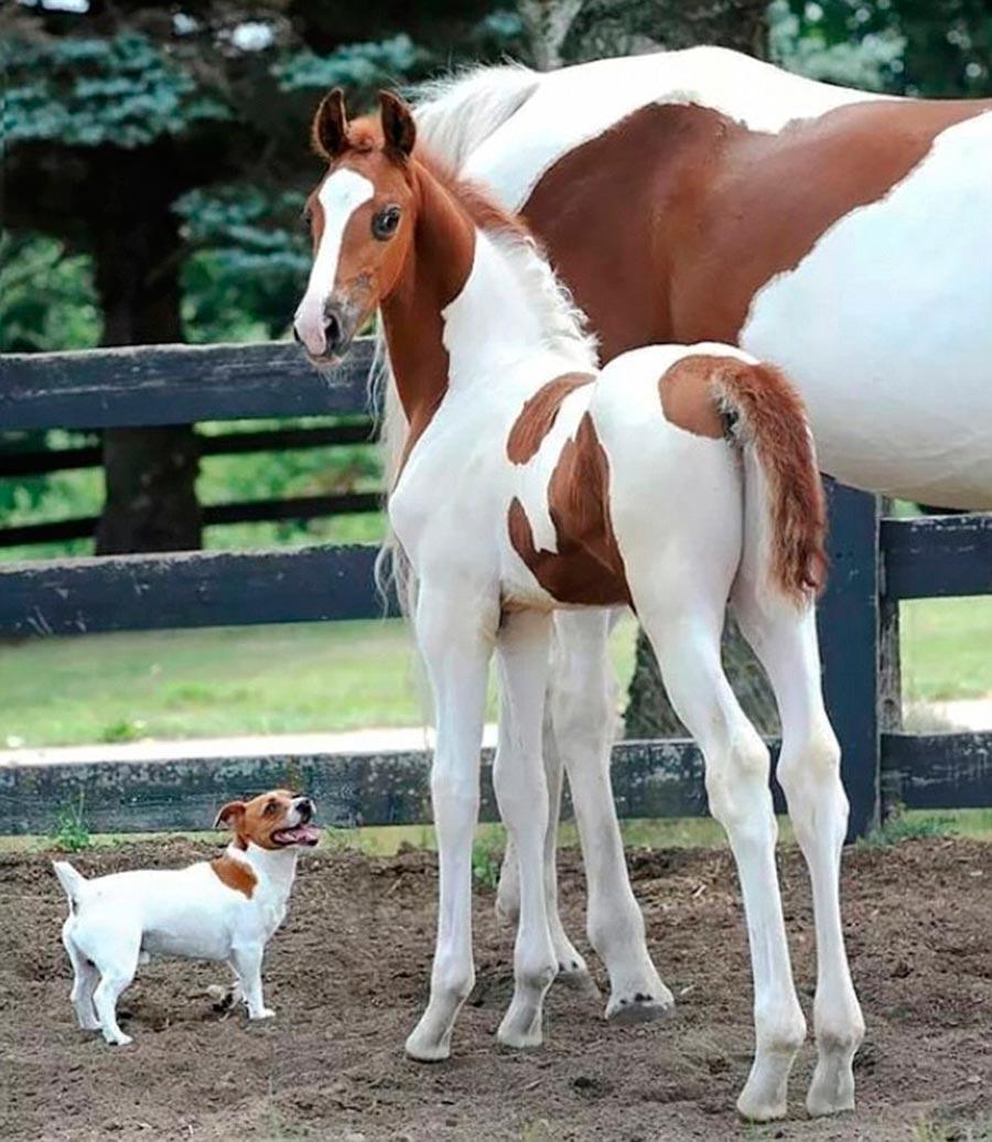 Двойники в мире животных собака лошадь жеребенок