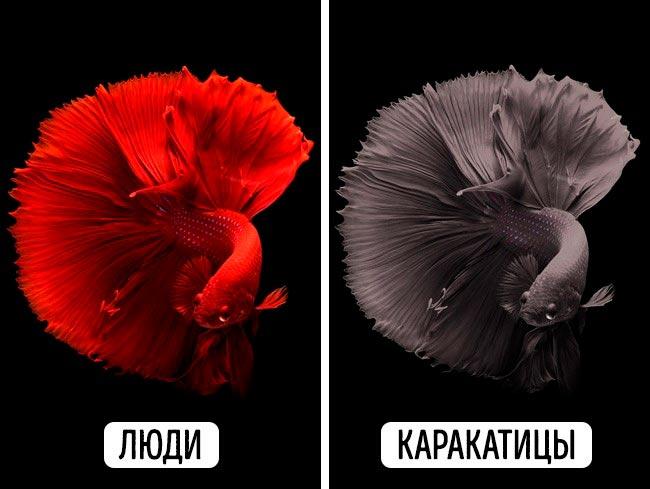 Цвета, в которых животные видят наш мир