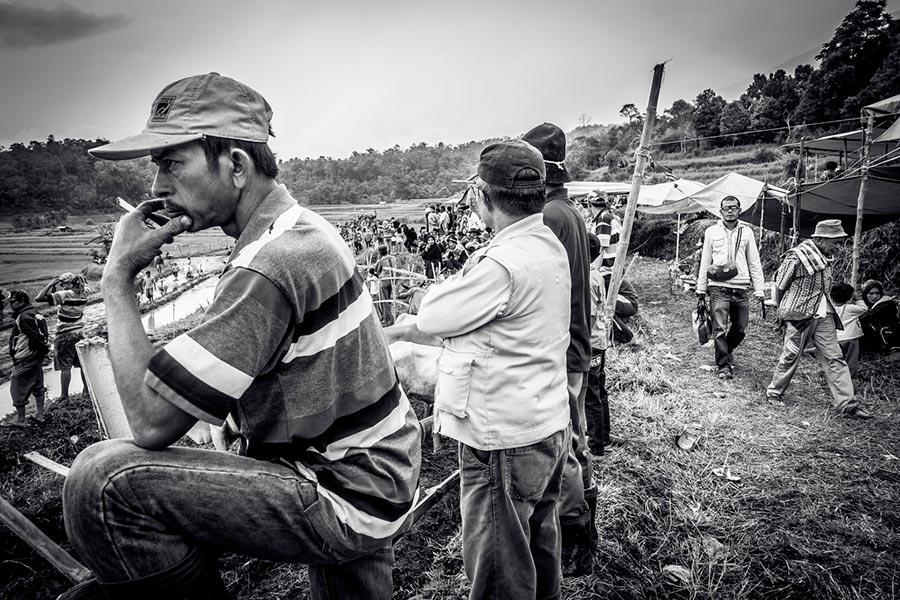 Гонки на быках в Индонезии пачу джави pacu jawi