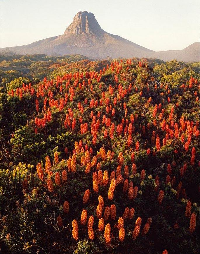 Peter Dombrovskis Питер Домбровскис красота Тасмании Tasmania