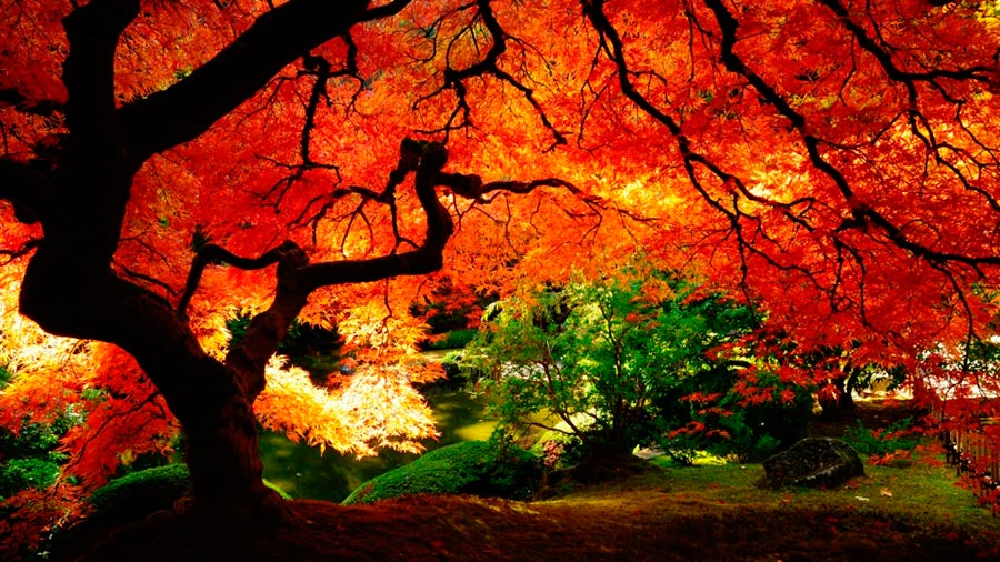 Где осень выглядит великолепно Новая Англия США