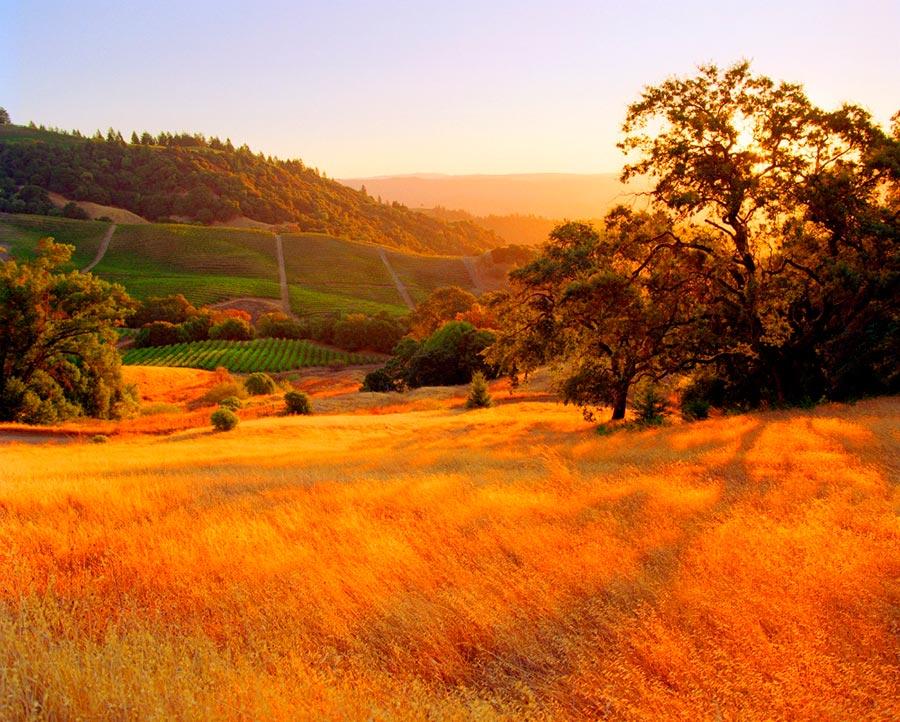 Где осень выглядит великолепно Сонома Каунти Калифорния США