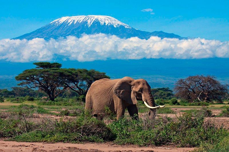 Места на Земле могут исчезнут Гора Килиманджаро