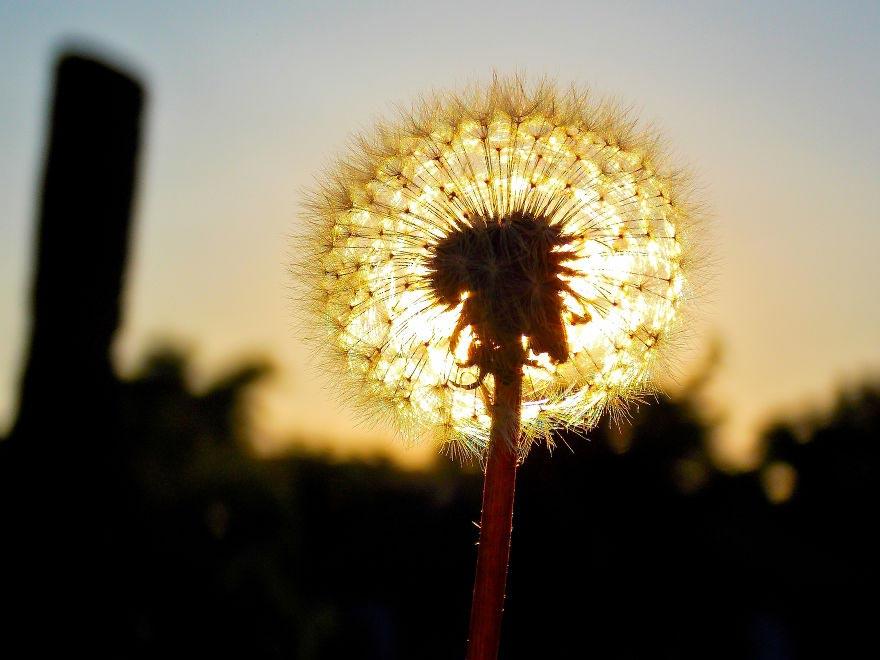 Великолепие полевых цветов wildflowers