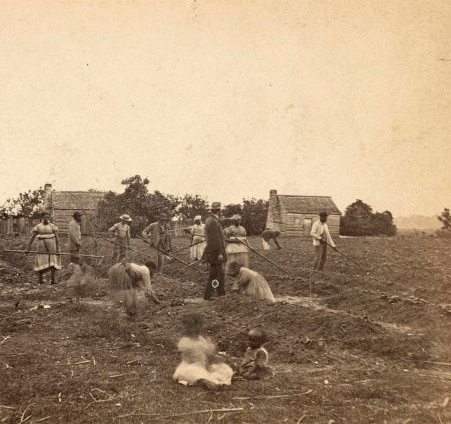 Грустная правда о жизни американских рабов Сирка Айленд, Южная Калифорния