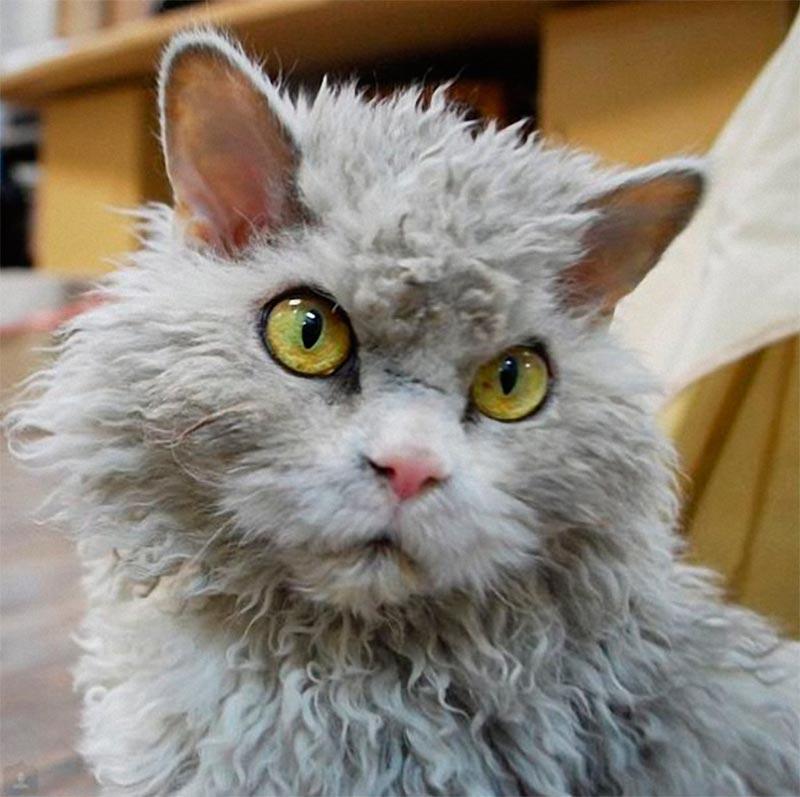 Альберт — самый злой котик Albert evil cat