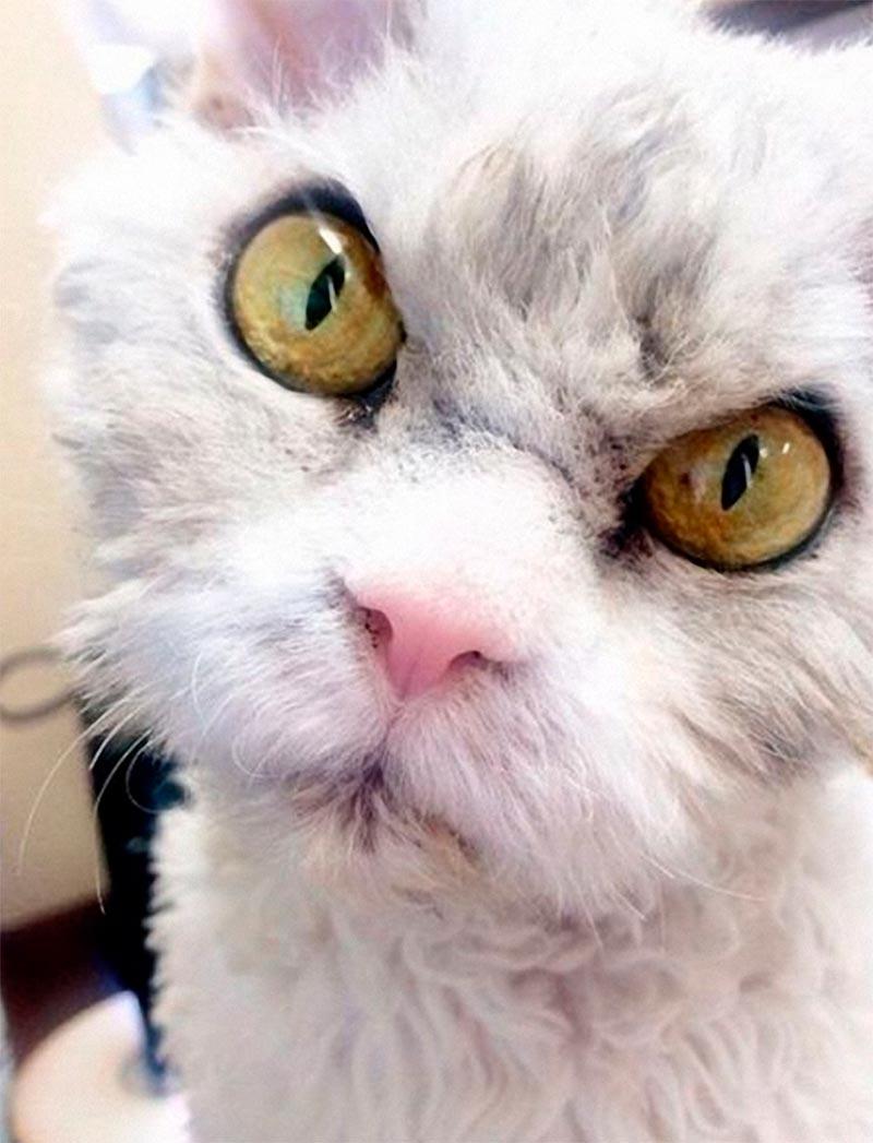 Смешная картинка злой кот, смешного