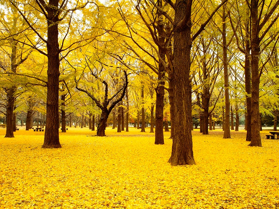 городской парк city park Парк Ёёги Токио Япония Yoyogi park Totyo Japan