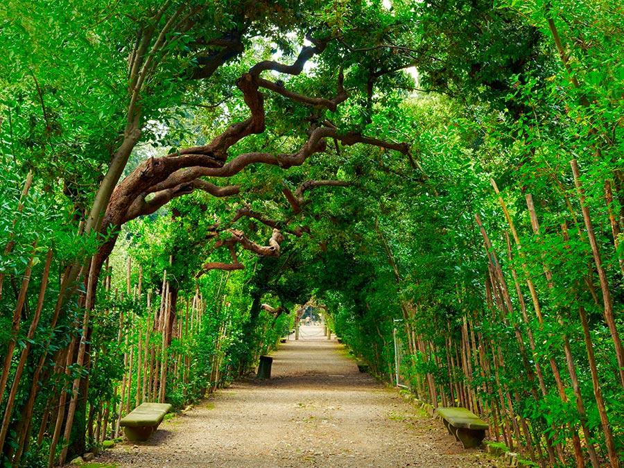 городской парк city park Сады Боболи Флоренция Италия Boboli gardens Florence Italy