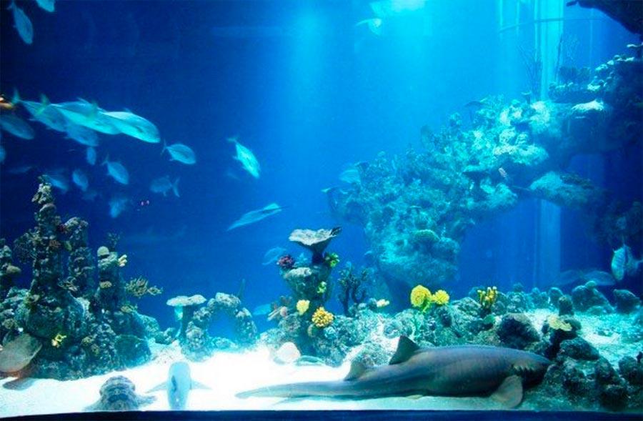 аквариумы Дип Акуариум Халл Великобритания Great Britain