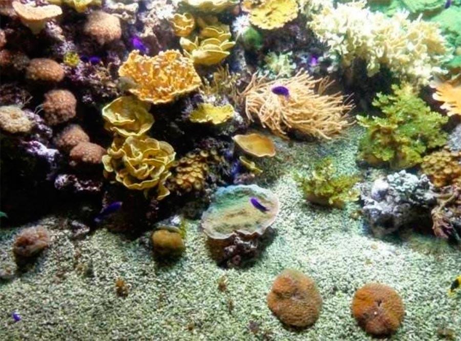 аквариум Генуи Италия Italy