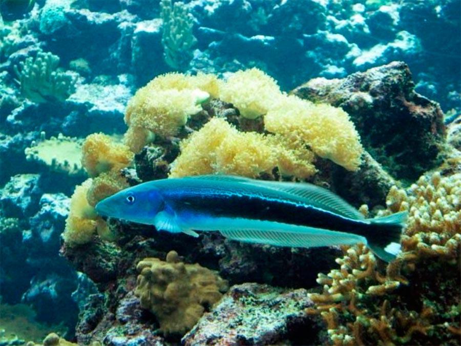 аквариум Арнемский океанариум Нидерланды Nitherland