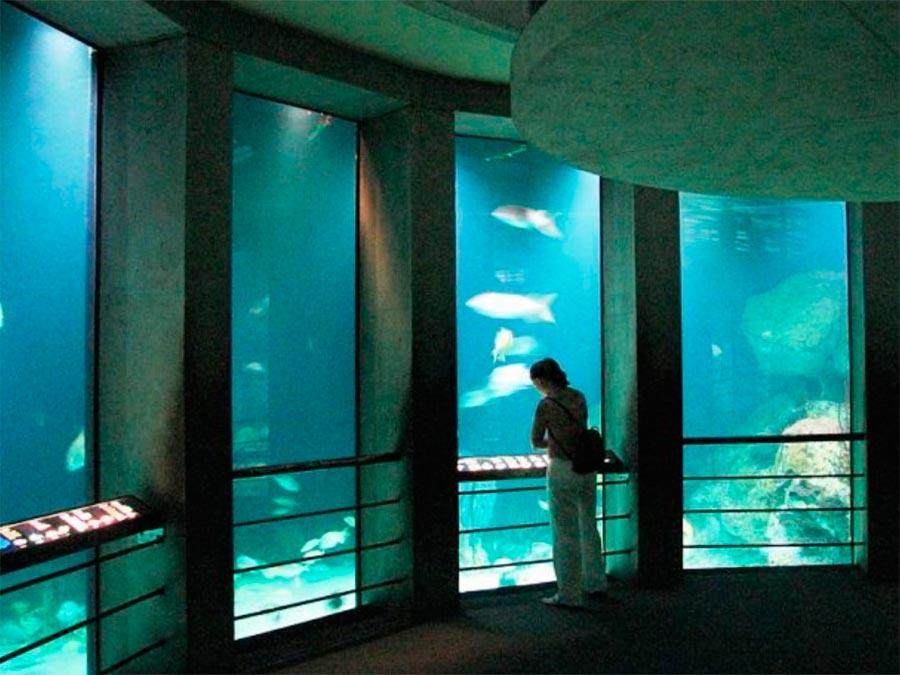 Национальный Аквариум Балтимор Мериленд США Baltimore Maryland USA