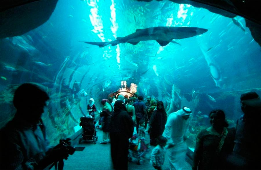 Аквариум Дубай ОАЭ Dubai UAE