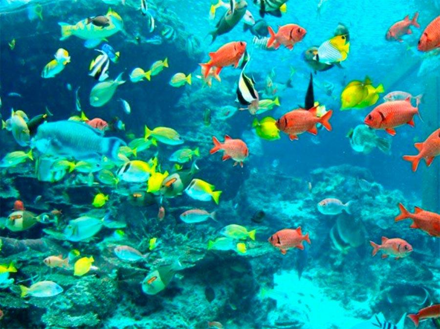 Аквариум Океанариум Тюрауми Окинава Япония Okinawa Japan