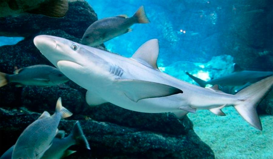 Аквариум Морской Мир Ушака Дурбан ЮАР Durban South Africa