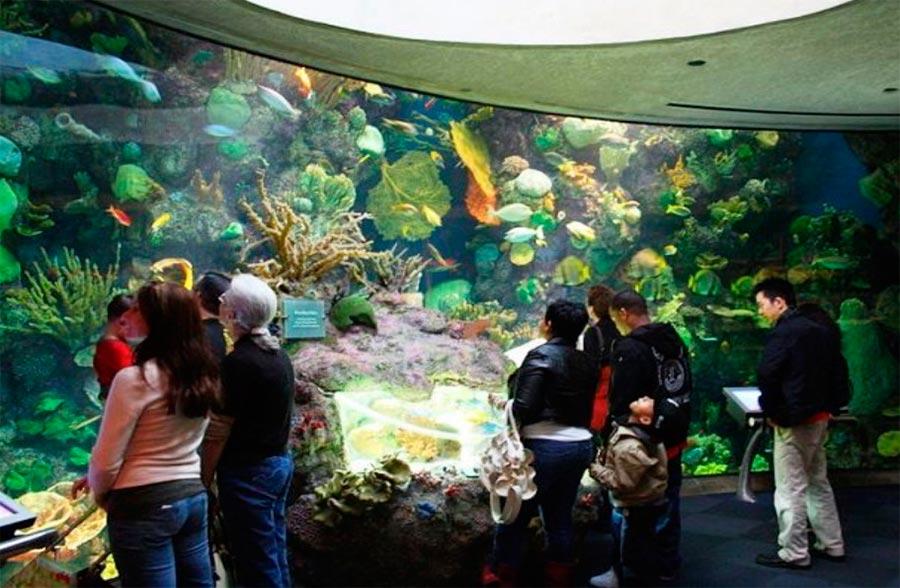 Аквариум Шед Акуариум Чикаго США Chicago USA