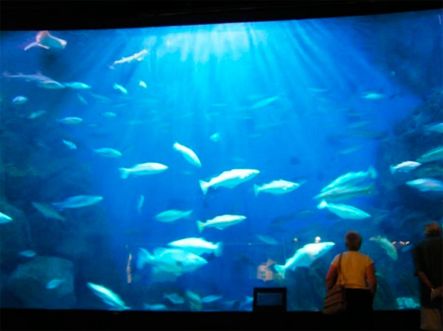 аквариумы Национальный морской аквариум Плимут Great Britain