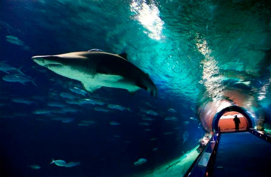 Аквариум Океанографик Валенсия Испания Valencia Spain
