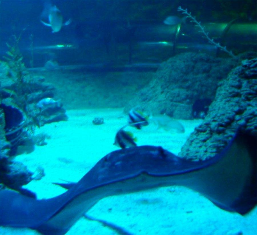 аквариумы Аквариум Западной Австралии Перт Австралия Perth Australia