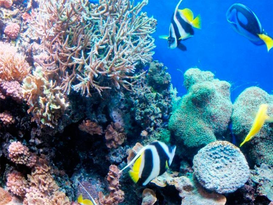 аквариумы Монтеррей Бэй Акуариум Монтерей Калифорния Monterey CA