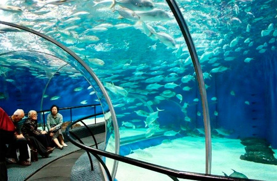 аквариумы Шанхайский Океанариум Китай China