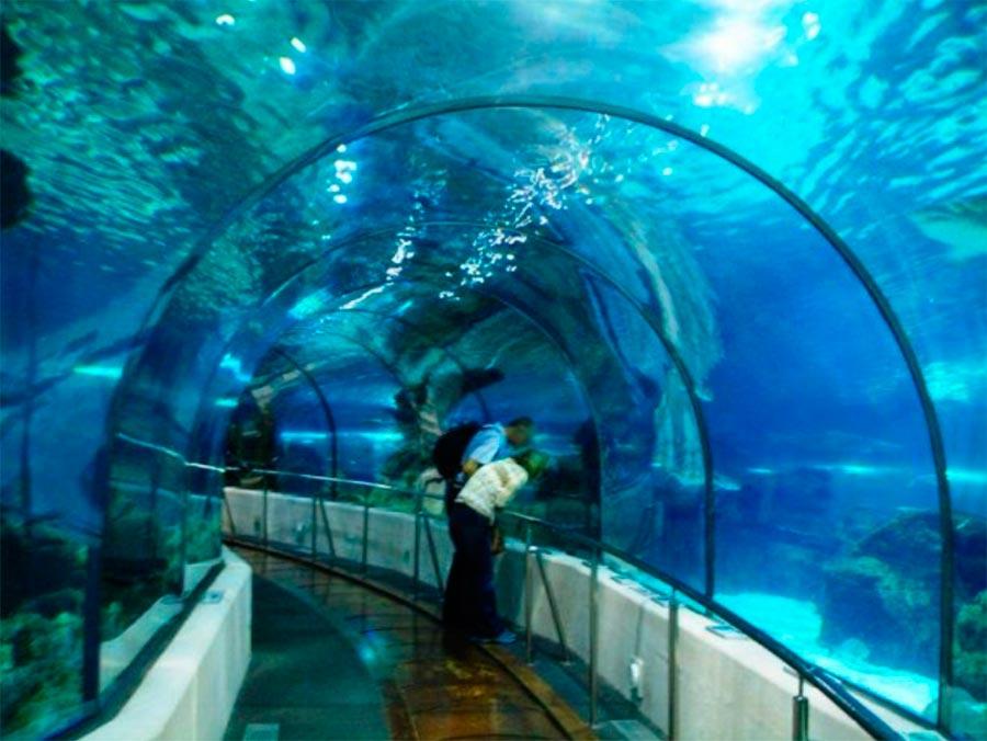 аквариумы Барселонский Аквариум Испания Spain
