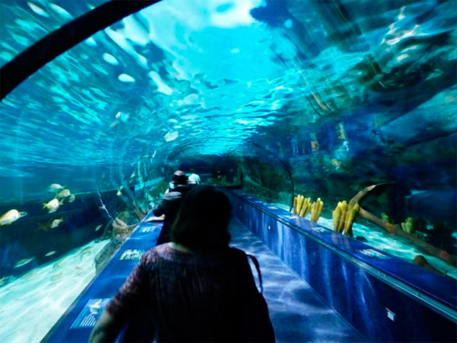 аквариумы Аквариум Рипли Торонто Канада Toronto Canada