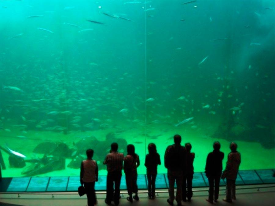 аквариумы Нортсдёен Океанариум Хиртсхальс Дания Hirshals Denmark