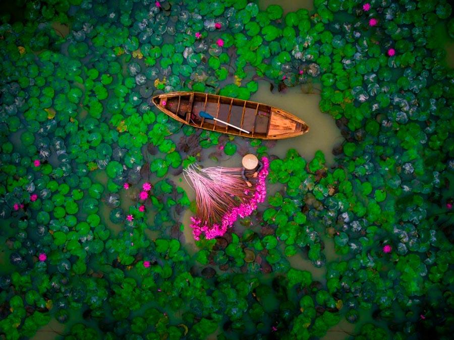 фотографии сделанные дронами photos taken by drones helios1412 Водяные лилии