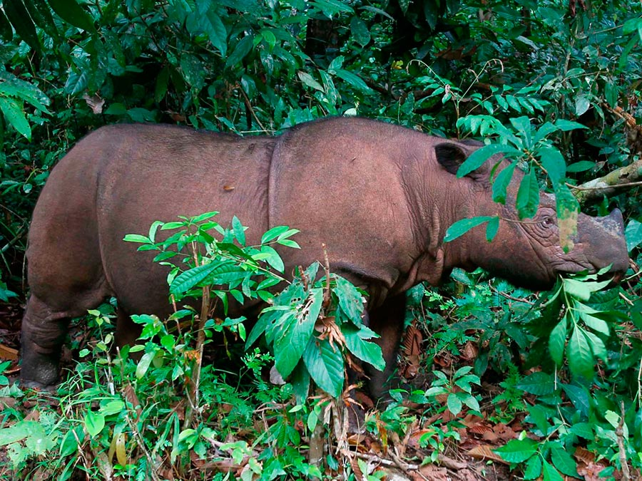 rareanimals verge extinction 1 - ТОП-10 Редких животных на грани вымирания
