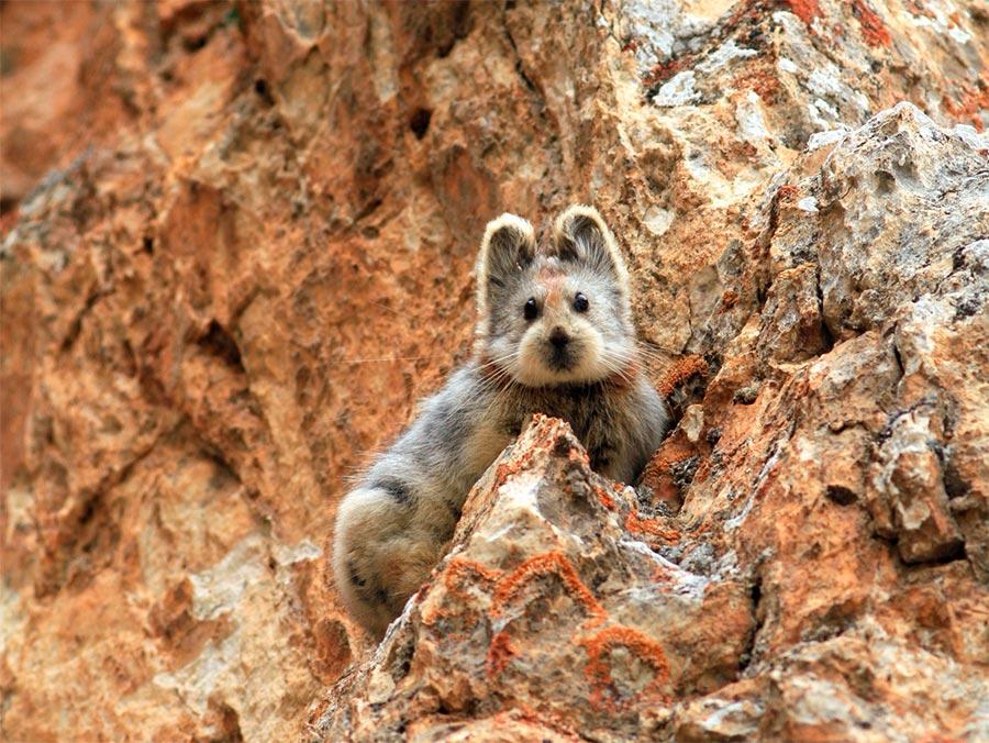 rareanimals verge extinction 10 - ТОП-10 Редких животных на грани вымирания