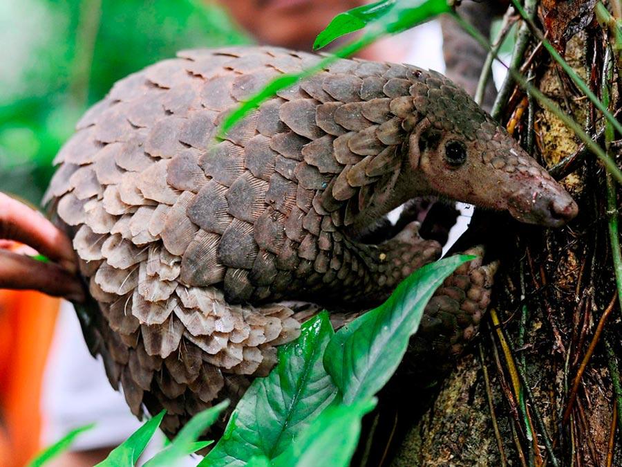 rareanimals verge extinction 2 - ТОП-10 Редких животных на грани вымирания