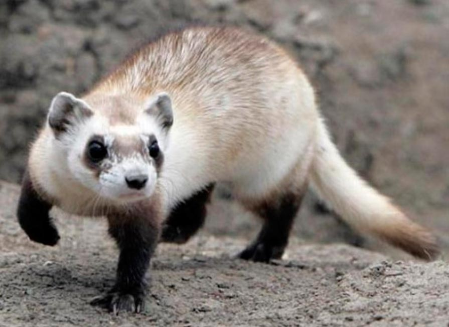 rareanimals verge extinction 3 - ТОП-10 Редких животных на грани вымирания