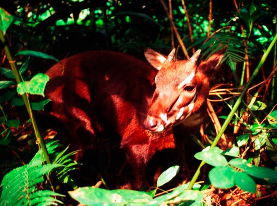 rareanimals verge extinction 4 - ТОП-10 Редких животных на грани вымирания