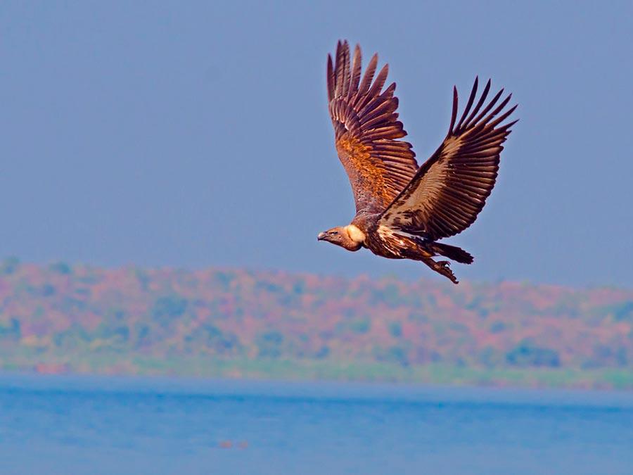 rareanimals verge extinction 5 - ТОП-10 Редких животных на грани вымирания