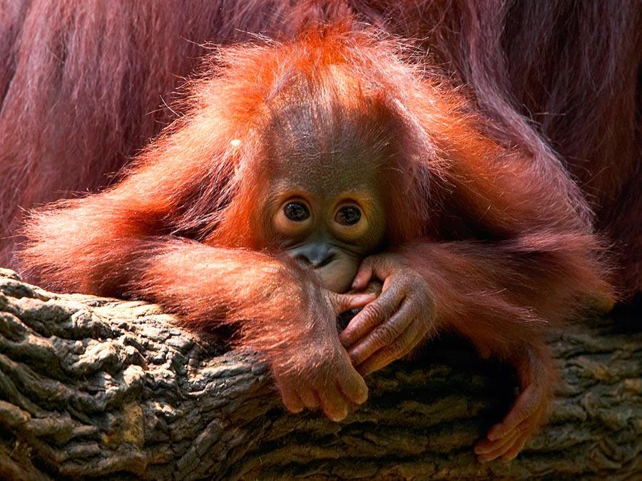 rareanimals verge extinction 6 - ТОП-10 Редких животных на грани вымирания