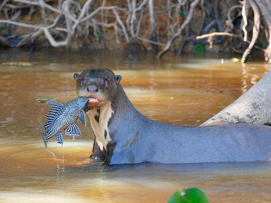 rareanimals verge extinction 7 - ТОП-10 Редких животных на грани вымирания
