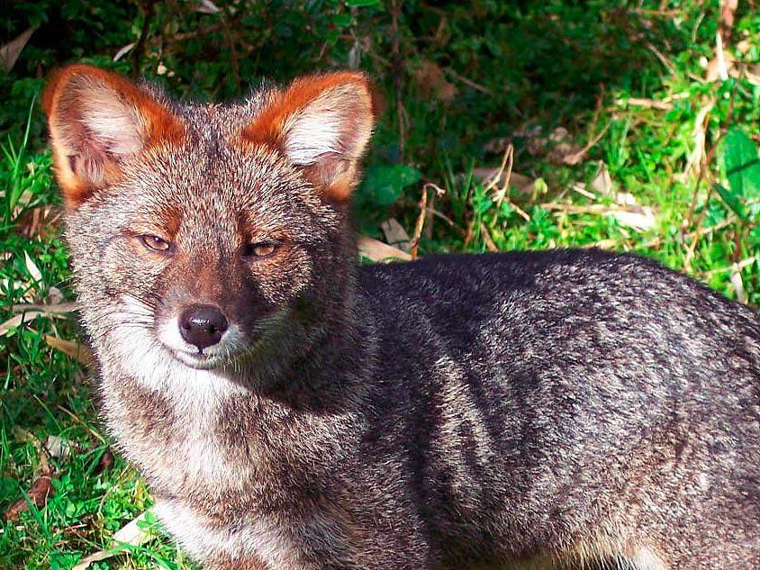 rareanimals verge extinction 8 - ТОП-10 Редких животных на грани вымирания